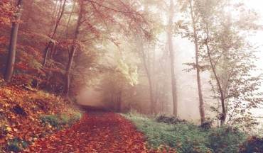 wood-lying-pathways-autumn-forest