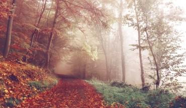 wood-lying-pathways-autumn-forest